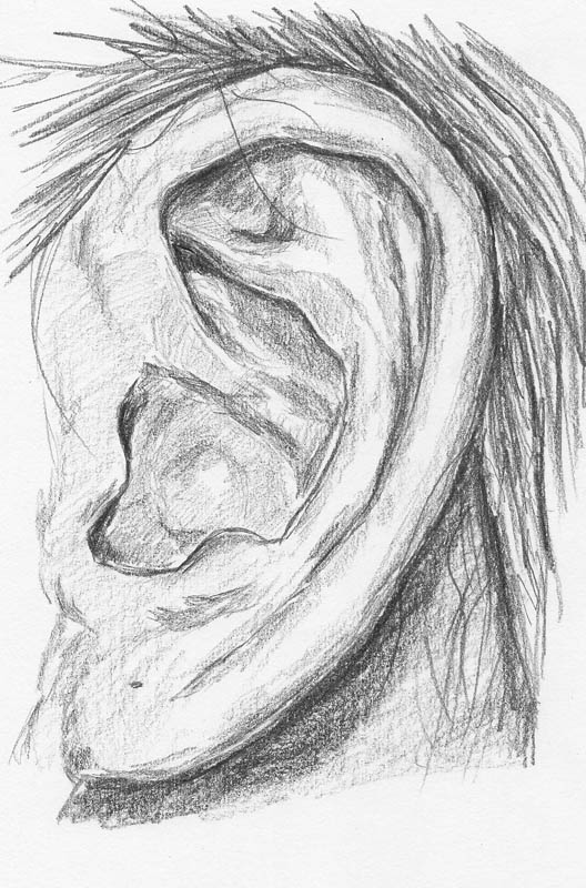 how to draw ears finishing touches