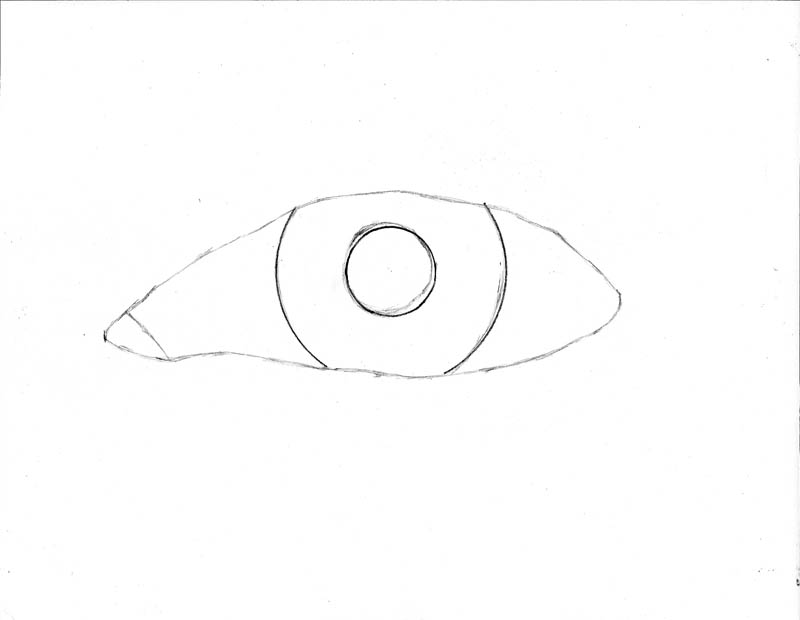 Sharp Eyes Drawing Most of The Eye Highlights i