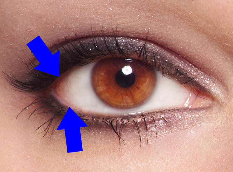 02 how to draw a face photo eyelid rim
