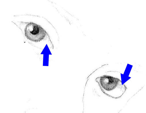 Tortillion shading applied to the upper eyes to mimic shading from the eyelid