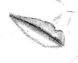 Tortillion smudging of the lips to illustrate shading